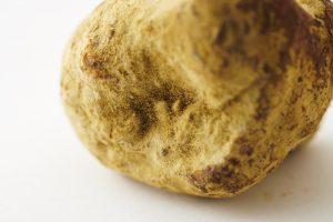 豆麹の麹菌